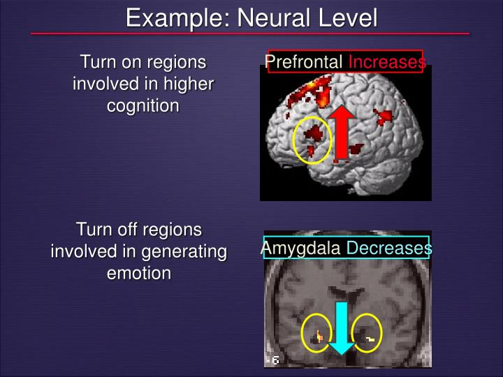 Example: Neural Level