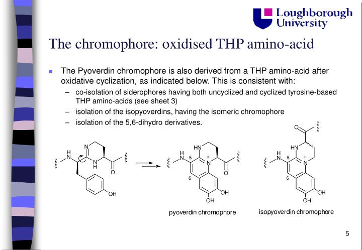 The chromophore: oxidised THP amino-acid