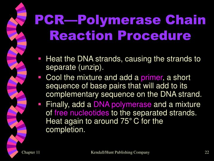 PCR—Polymerase Chain Reaction Procedure