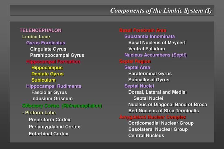 Components of the Limbic System (I)