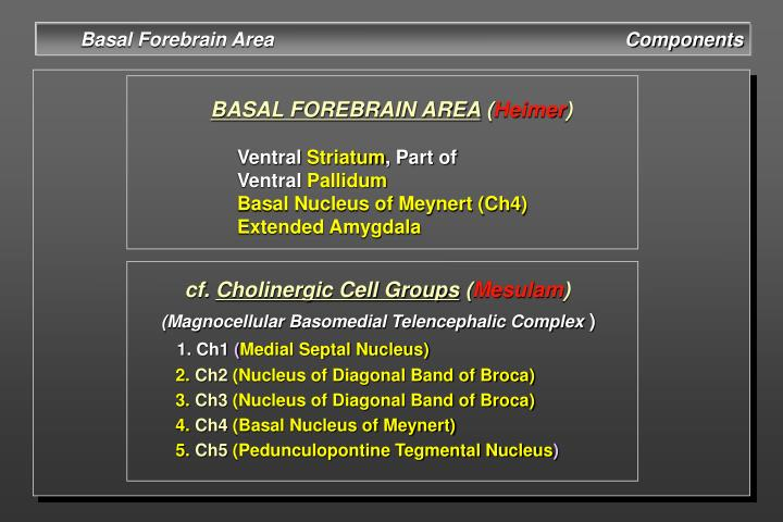 Basal Forebrain Area                                                                  Components