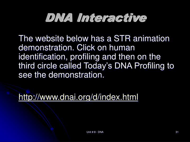 DNA Interactive