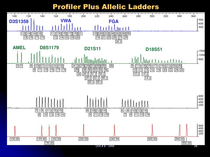 Profiler Plus Allelic Ladders