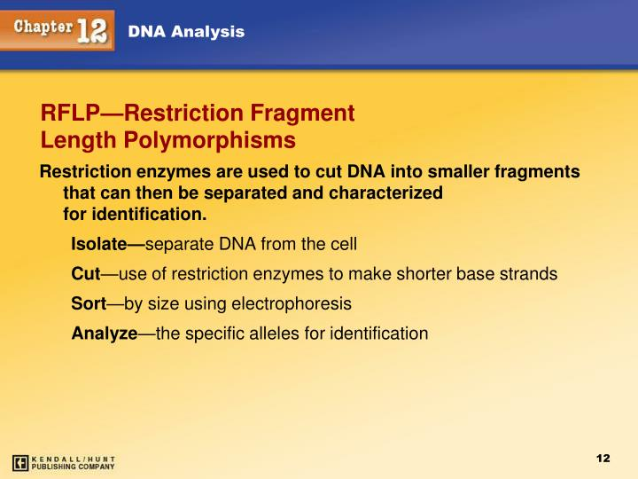 Restriction enzymes are used to cut DNA into smaller fragments that can then be separated and characterized