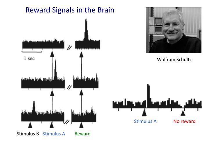 Reward Signals in the Brain