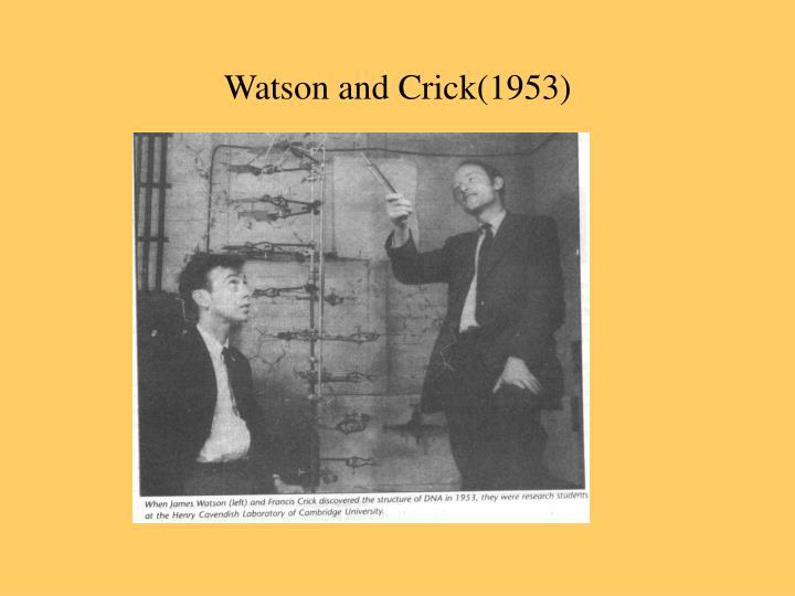 Watson and Crick(1953)