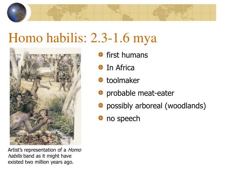 Homo habilis: 2.3-1.6 mya