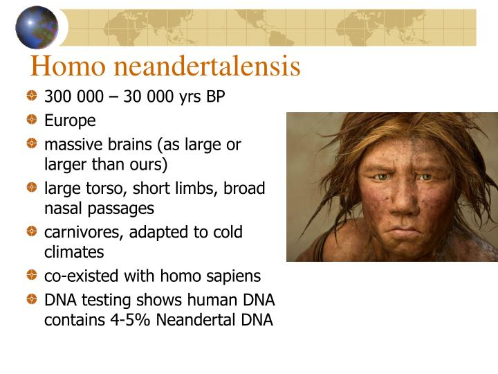 Homo neandertalensis