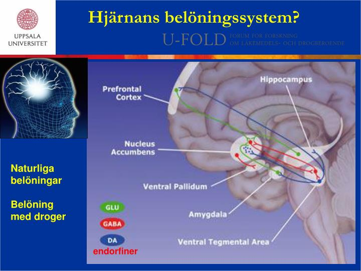 Hjärnans belöningssystem?