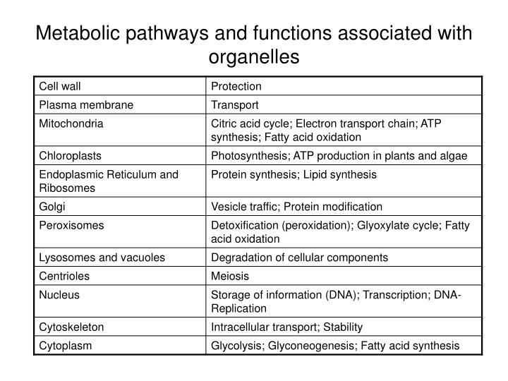 Metabolic pathways and functions associated with organelles