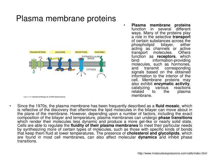 Plasma membrane proteins