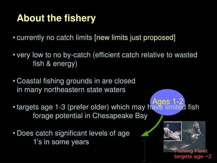 About the fishery