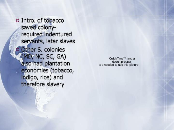 Intro. of tobacco saved colony-required indentured servants, later slaves