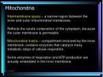 mitochondria4