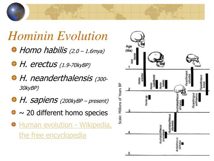 Hominin Evolution