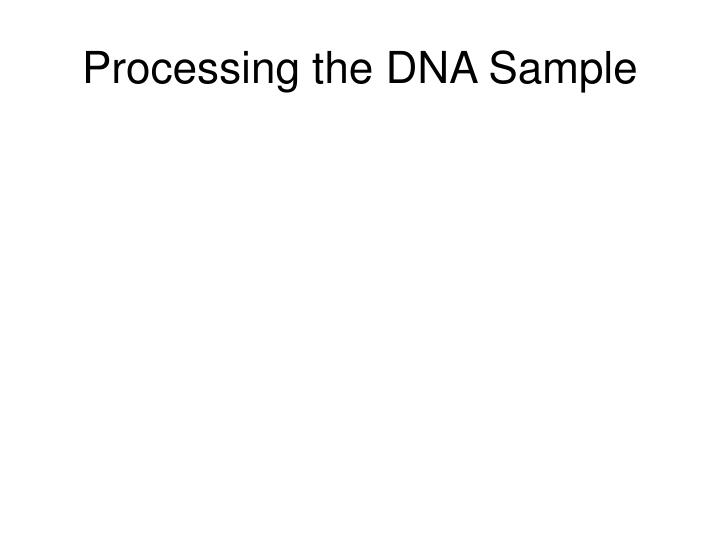 Processing the DNA Sample