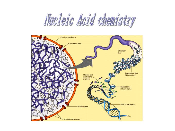Nucleic Acid chemistry