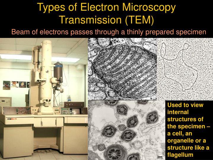 Types of Electron Microscopy