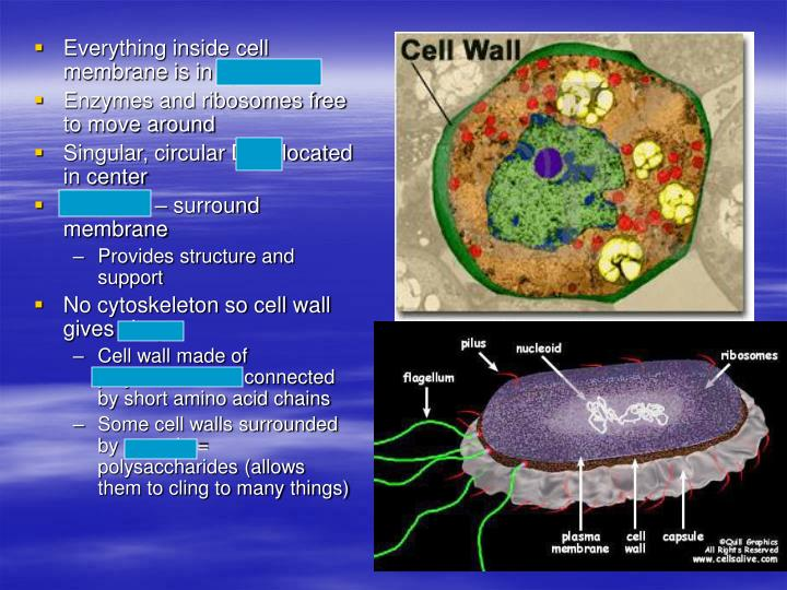 Everything inside cell membrane is in cytoplasm