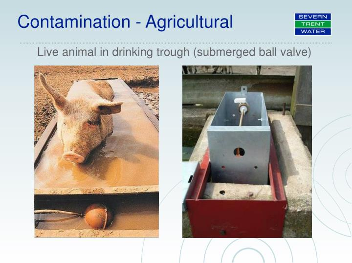Live animal in drinking trough (submerged ball valve)