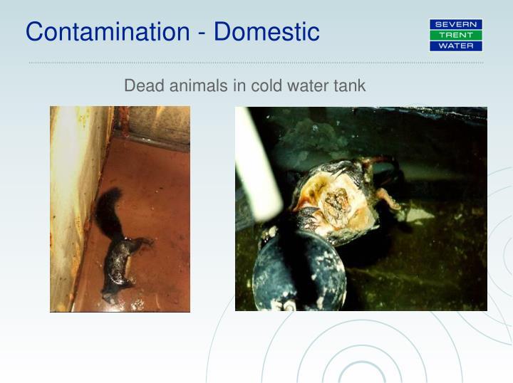 Contamination - Domestic