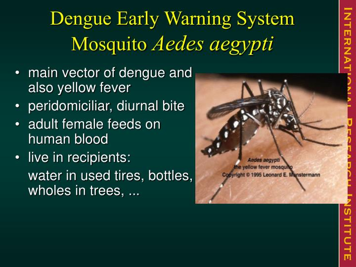 Dengue Early Warning System Mosquito