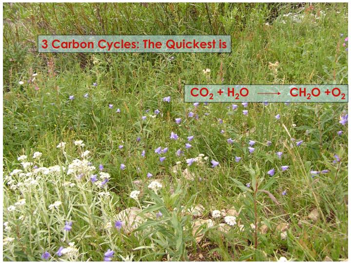 3 Carbon Cycles: The Quickest is