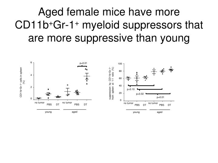 Aged female mice have more CD11b