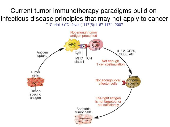 Current tumor immunotherapy paradigms build on