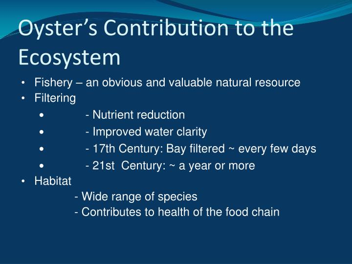 Oyster's Contribution to the Ecosystem