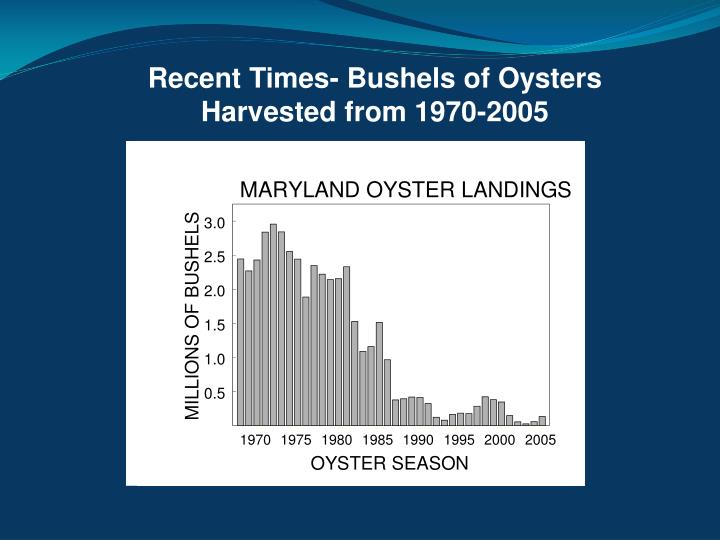 Recent Times- Bushels of Oysters Harvested from 1970-2005