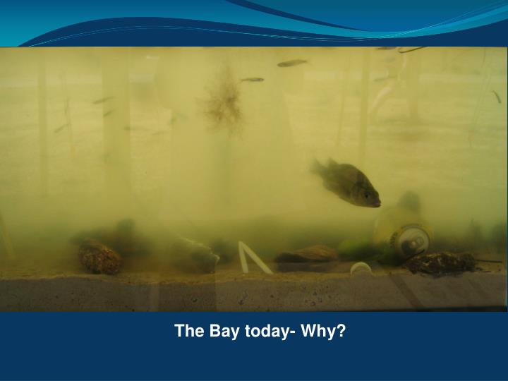 The Bay today- Why?