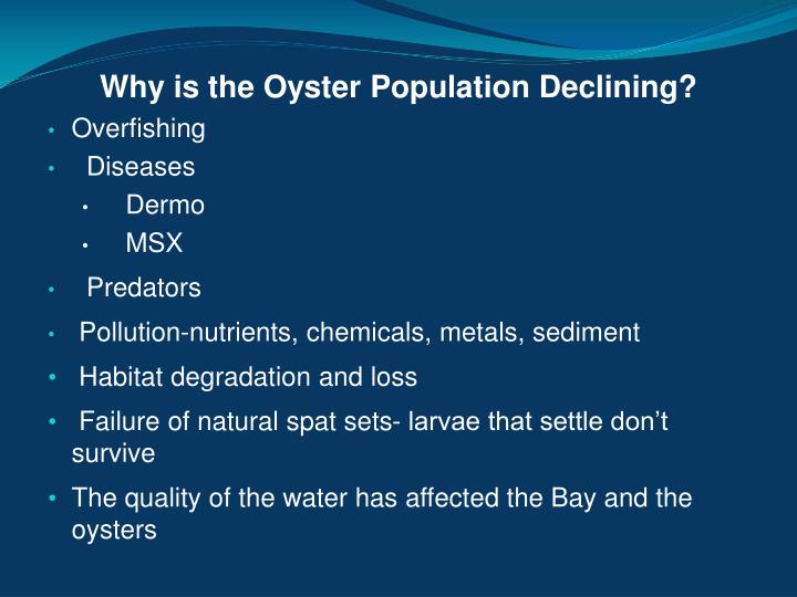 Why is the Oyster Population Declining?
