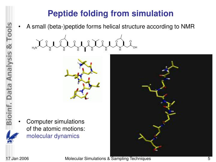 Peptide folding from simulation