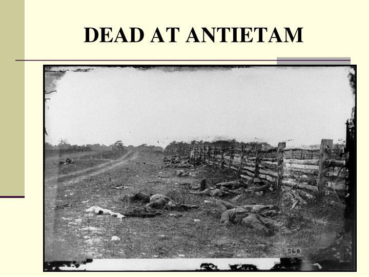 DEAD AT ANTIETAM