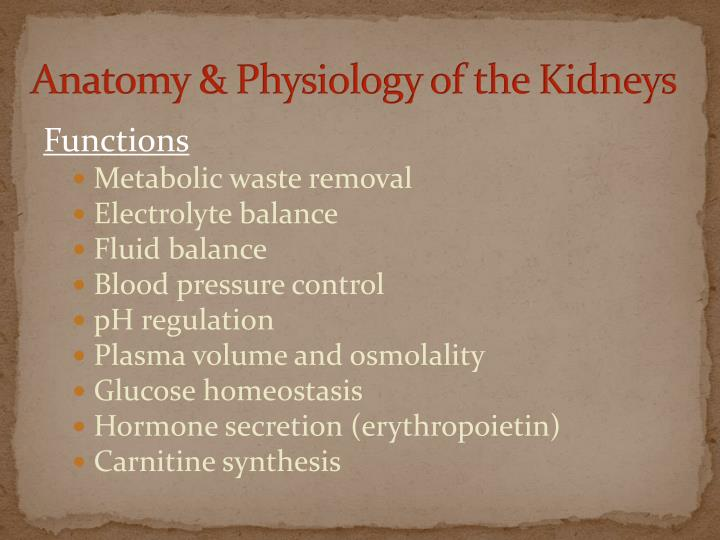 Anatomy & Physiology of the Kidneys