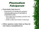 plasmodium falciparum1