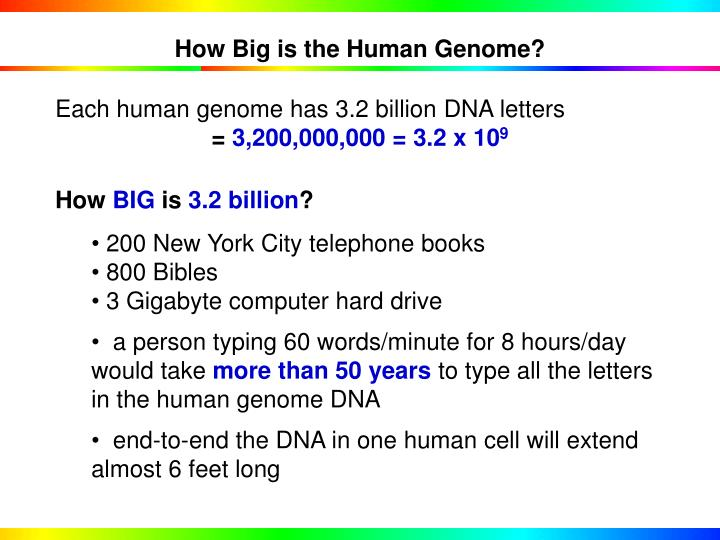 How Big is the Human Genome?