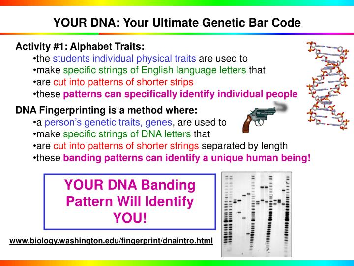 YOUR DNA: Your Ultimate Genetic Bar Code