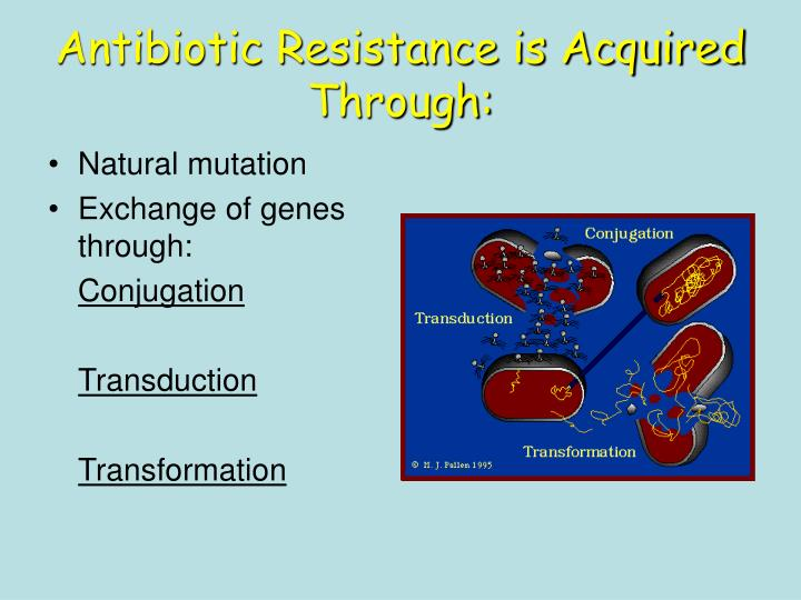 Antibiotic Resistance is Acquired Through: