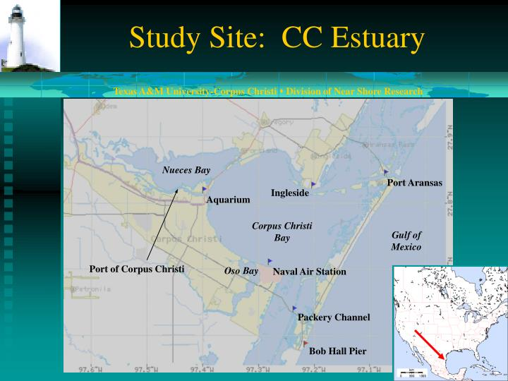 Study Site:  CC Estuary