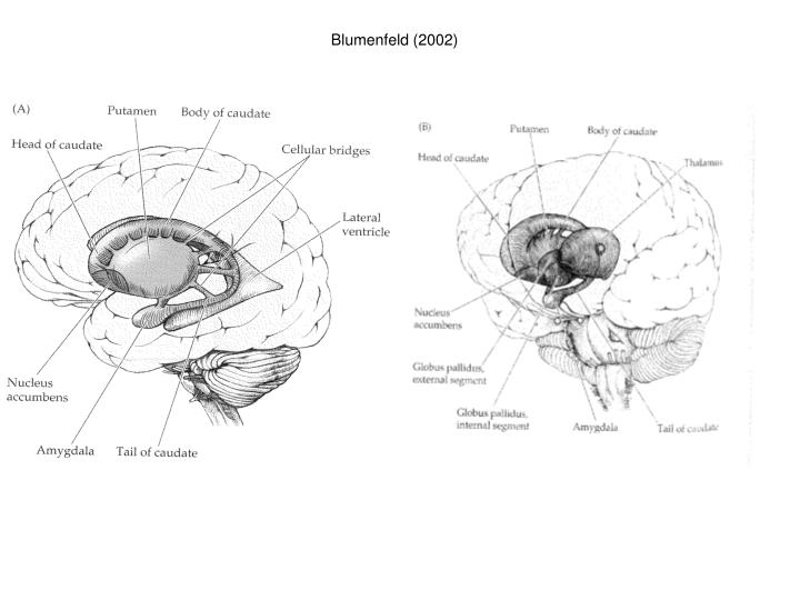 Blumenfeld (2002)