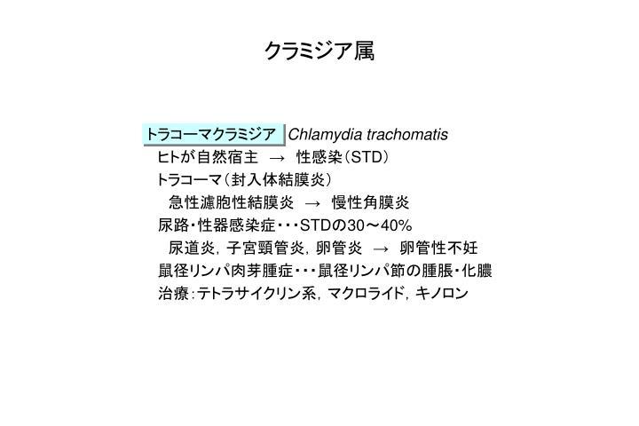 クラミジア属