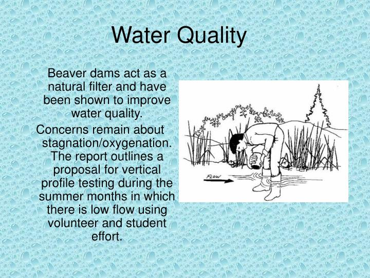 Beaver dams act as a natural filter and have been shown to improve water quality.