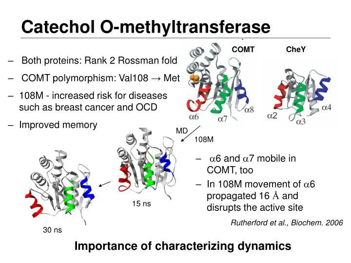 Catechol O-methyltransferase