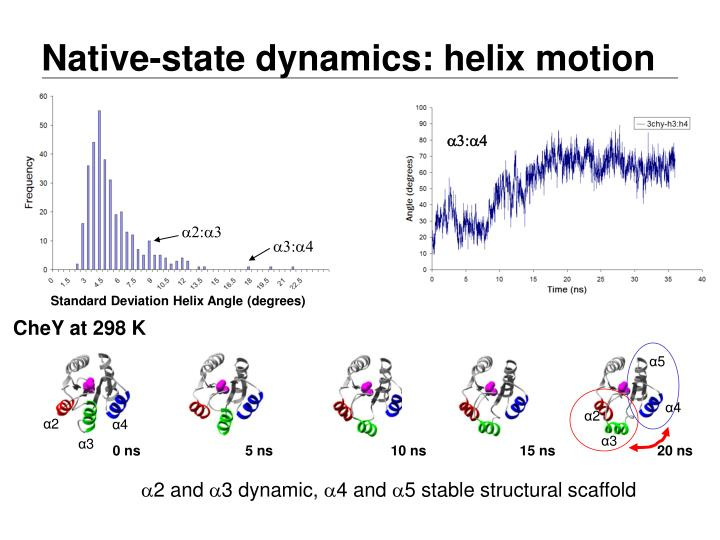 Native-state dynamics: helix motion