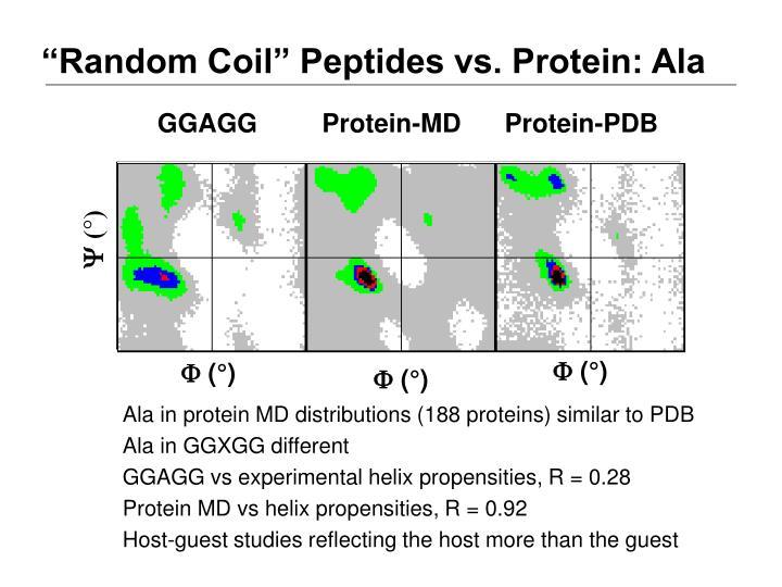 """""""Random Coil"""" Peptides vs. Protein: Ala"""