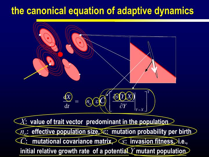 the canonical equation of adaptive dynamics