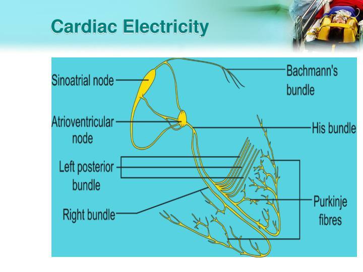Cardiac Electricity