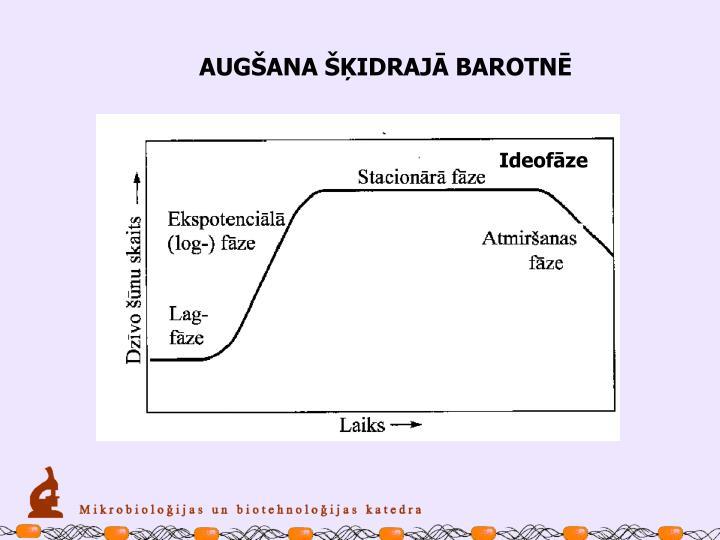 AUGŠANA ŠĶIDRAJĀ BAROTNĒ